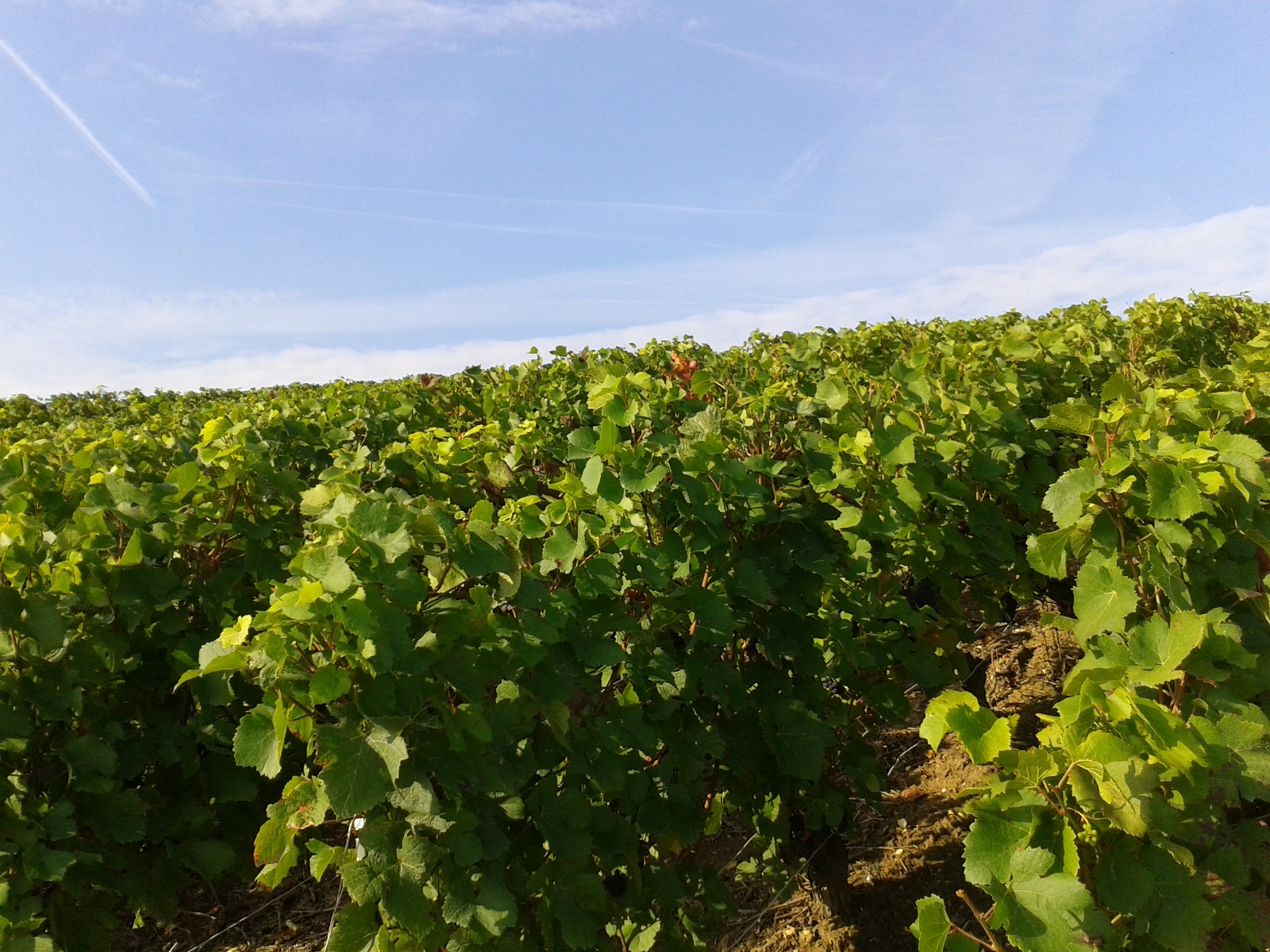 Tourism Champagne Ardenne Visit the Champagne wine region Stay